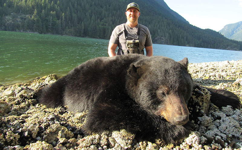 Black bear hunting in Southwestern BC, Canada