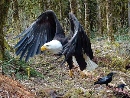 Prepare for your black bear or roosevelt elk hunt