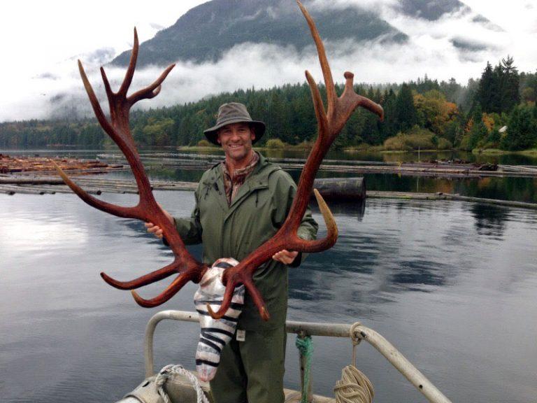 roosevelt-elk-hunting-bc-13